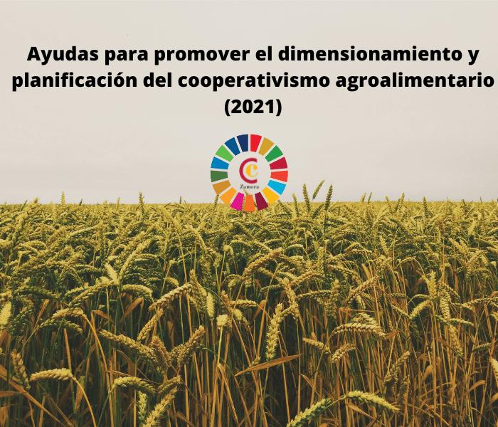 Ayudas para promover el dimensionamiento y planificación del cooperativismo agroalimentario (2021)