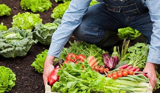 Subvenciones a la transformación y comercialización de los productos agrarios, silvícolas y de la alimentación del programa de desarrollo rural de Castilla y León 2014-2020 cofinanciado por el FEADER